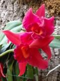 orchidshow0012.JPG