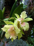 orchidshow0016.JPG