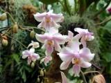 orchidshow0024.JPG