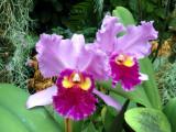 orchidshow0030.JPG