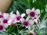 orchidshow0044.JPG