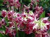 orchidshow0063.JPG