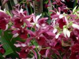 orchidshow0065.JPG