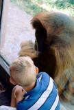 12 primates.JPG