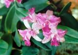 04_orchid.JPG