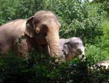 elephants 071010