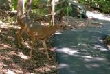 04_deer_3737.JPG