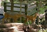 09_deer_3752.JPG