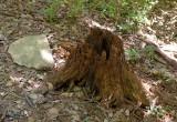 10_stump_3759.JPG