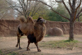 7358_two_humps.JPG