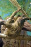 4171_sloth.JPG