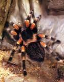 4204_big_spider.JPG