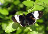 4210_butterfly.JPG