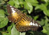 4214_butterfly.JPG