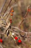 4236_berries.JPG