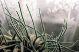 0012_cactus.jpg