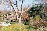 japanese garden1.jpg.jpg