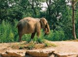 lone-elephant.jpg