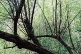 09_greensboro_bogs_overhead.JPG