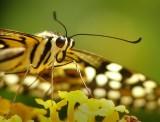 butterfly-closeup.jpg