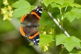 Ontario Mai 2010