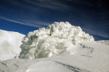 Snow Bush - שיח מושלג