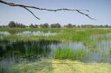 Swamp - ביצת חדרה