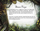 steam frogs text