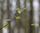 New Leaves at Bewl Water