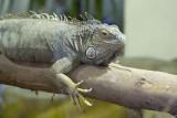 Lizard at Wingham Wildlife Park