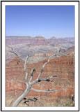 Tree at Grand Canyon 2
