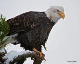 Eagle Northern Idaho_Ready to Go