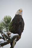 Eagle Northern Idaho