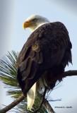 Eagle Lake Coeur d Alene