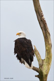 Eagle Port Susan WA