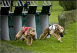 And  run !!!