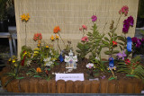My orchid show displays