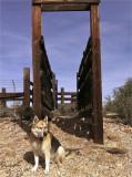 Dog Chute Master
