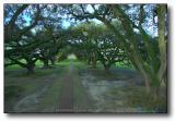 New Orleans : Oak Alley Plantation