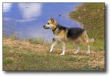 Trixie Dog and Lake