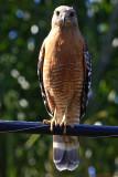 IMG_4873 birds.jpg