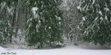Many down trees, the fences are down but the snow is too deep for the animals to care