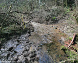After, Looking down the creek