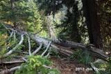 Klickitat Trail #7 from St John Lake to the Mission Mtn Ridge