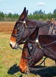Happ's Horse Power Days  2005