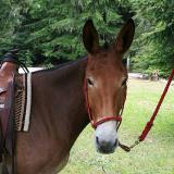 Larry's mule   (Dot Lake)