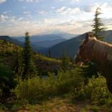 Mt. Rainer form Goat Mtn.