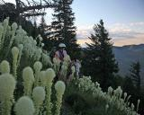Goat Mtn Trail with Bear Grass