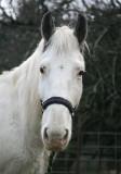 Casper the Friendly Horse