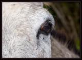 Donkey near Karpata